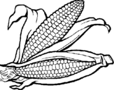 Coloring page Corncob painted bydf