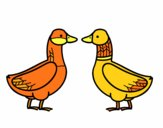Female duck and male duck